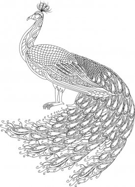 Hand drawn Peacock for anti stress Coloring Page with high details, isolated on white background, illustration in zentangle style. Vector monochrome sketch. Curly tale.