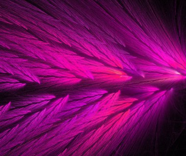 Hot pink and purple colored feather fractal shaped similar to parrot wings.