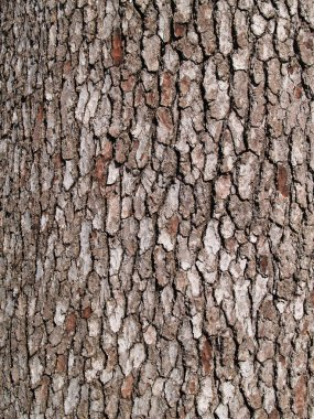 Close up Tree Bark Texture Background