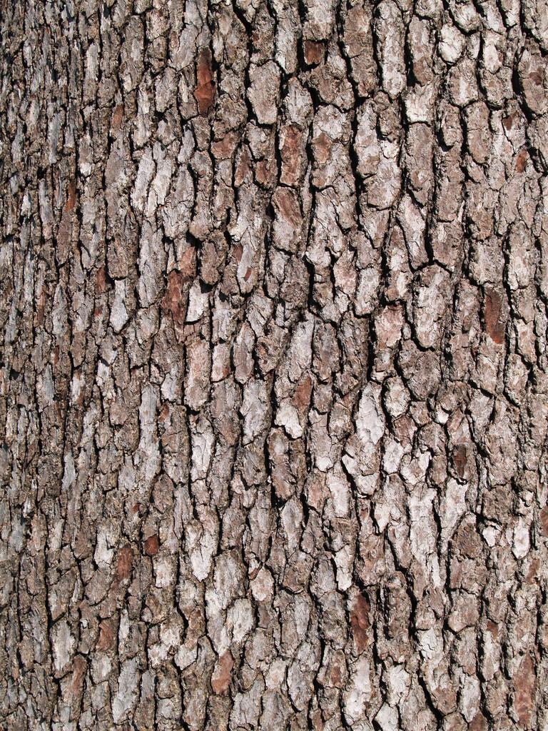 Close up Tree Bark Texture Background