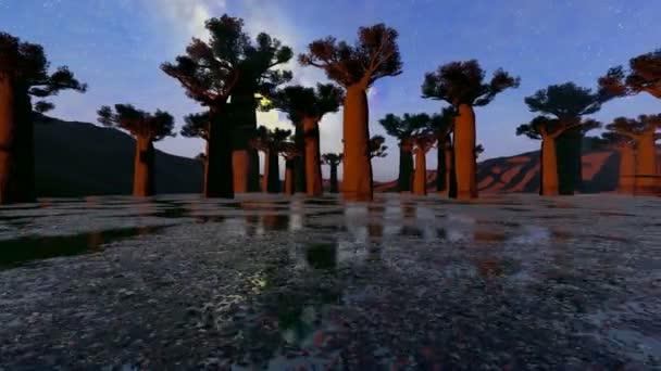 Baobab fák hajnalban Madagaszkáron