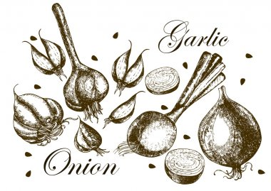 Set of drawing onions and garlic . Illustrations.