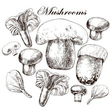 Vector set of hand drawn edible mushrooms