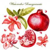 Nádherný akvarel s plody a květy granátového jablka