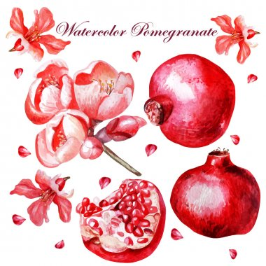 Beautiful watercolor set with fruits and flowers of pomegranate.
