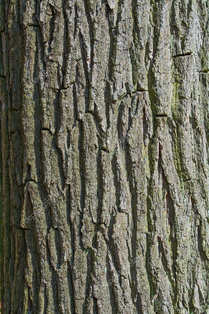 bark of a tree trunk, background texture