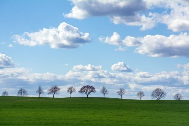 row of trees on a green field against blue sky with clouds