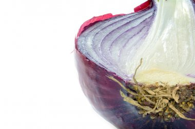 half red onion, close up shot isolated on white