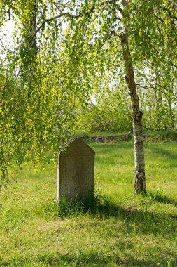old tombstone under a birch