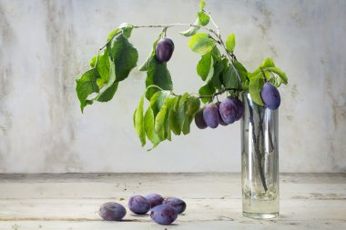 Branch with plums in a  vase and some fallen plums on a rustic w