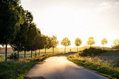 Country road  leading to the autumnal sunset light, concept of