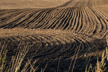 ploughed field with dark earth and curved tracks