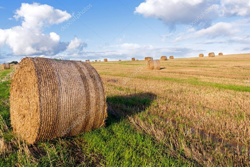 round straw bales on a mown field under a blue sky with white cl