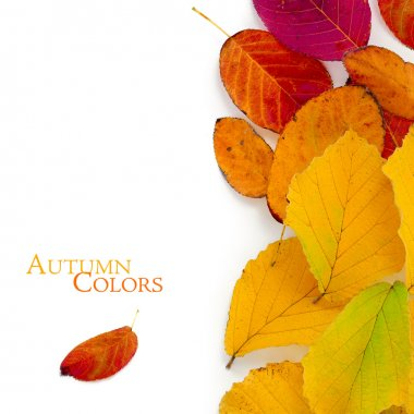 Autumn colors, red and golden leaves, vertical border isolated o