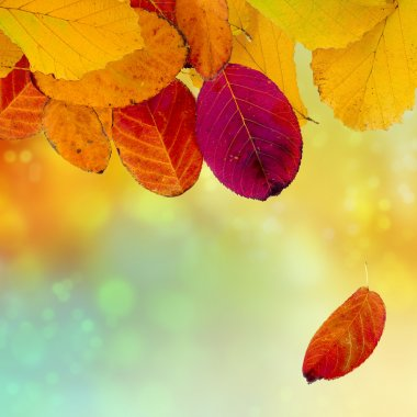 Autumn background with colorful leaves, copy space