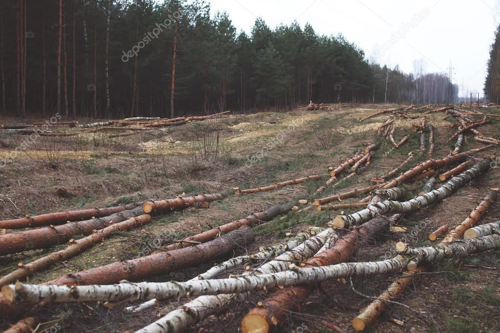 Environment, nature and deforestation forest concept - felling o