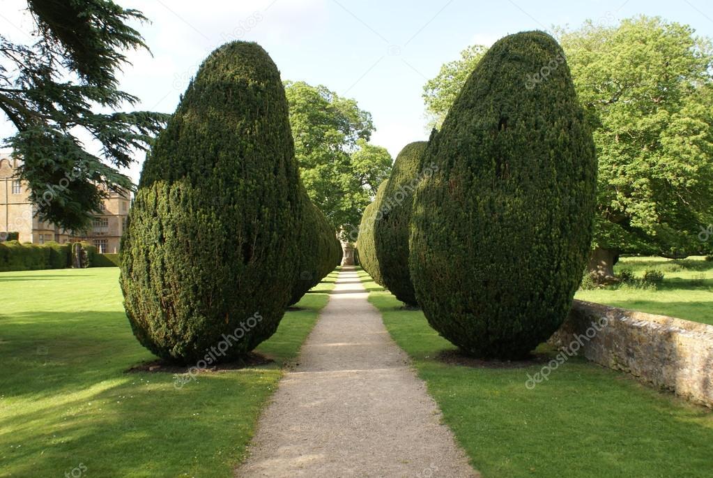 Viale di alberi da giardino foto stock rose4 105746470 - Foto di alberi da giardino ...