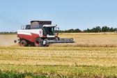sklizeň pšenice
