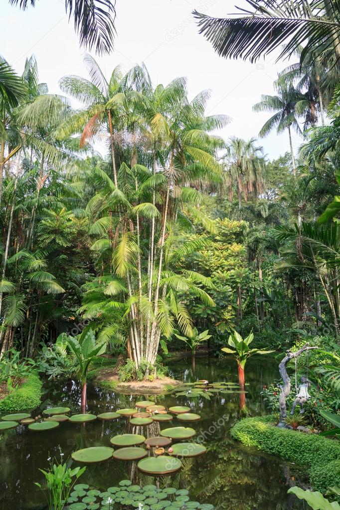 Estanque con nenúfares y palmeras en el jardín botánico de Singapur ...
