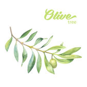 Photo Green watercolor olive branch