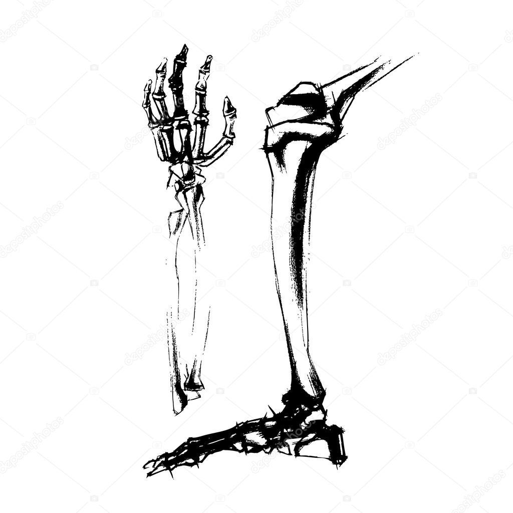 Abbildung von akademischen Zeichnung Knochen Bein und Hand des ...