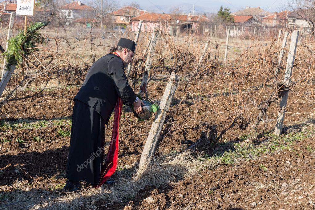 Poda Do Ritual Vinhas Na Bulgária Fotografia De Stock