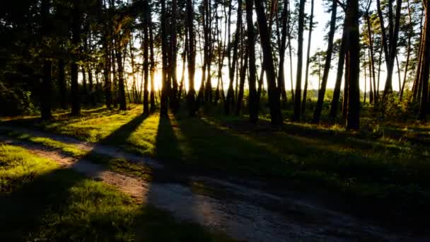 Time lapse of scene in a forest with sun setting and shining through the trees. Summer landscape