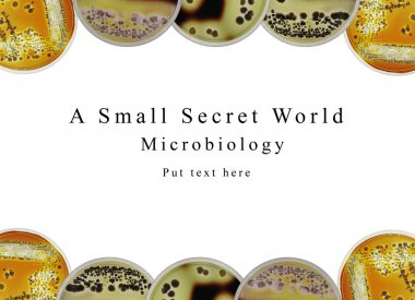 Powerpoint presentation background microbiology, petri dish and