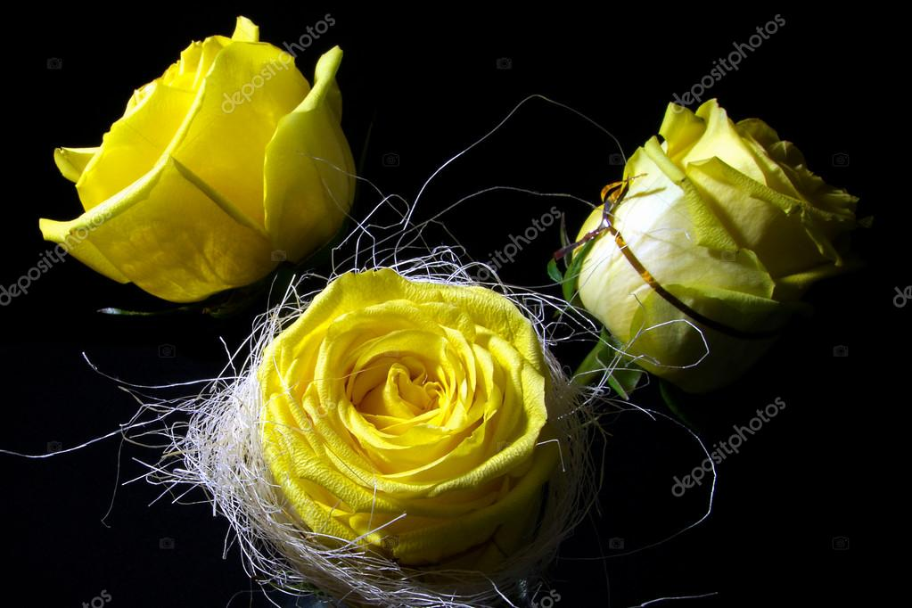 Three yellow roses on a black background