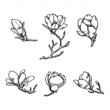 Spring magnolia flower black and white hand drawn vector sketch. Spring flowers collection.