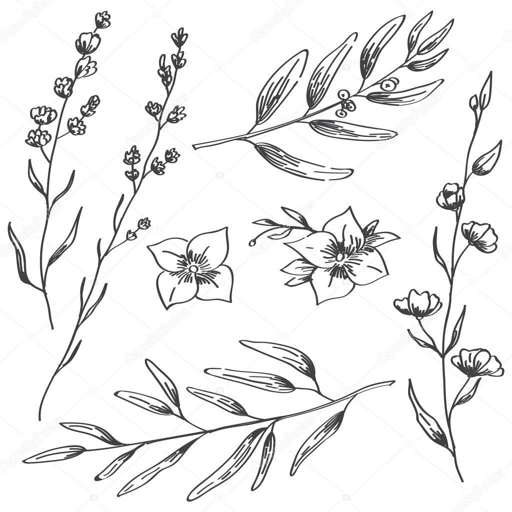 Dibujos Lavanda Para Colorear Flores De Jazmín Lavanda Y
