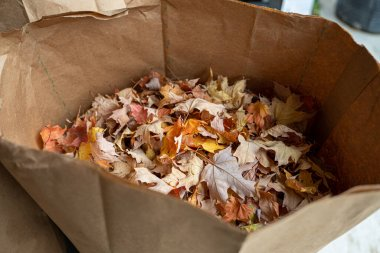 fall leaves have been bagged for disposal