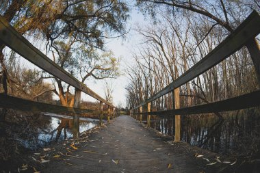 bridge crosses stream in fall on the path ahead of you