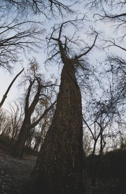 tall tree without leaves is on the spooky path ahead of you