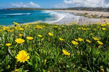 """Картина, постер, плакат, фотообои """"поле диких цветов рядом с океаном """", артикул 74128685"""
