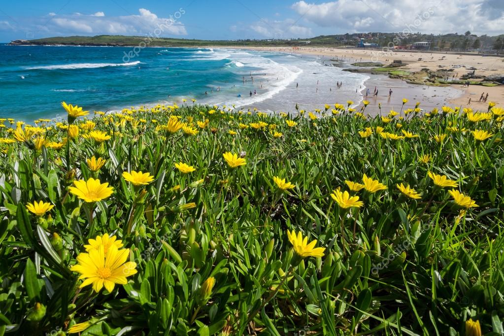Wild flowers field next to the ocean