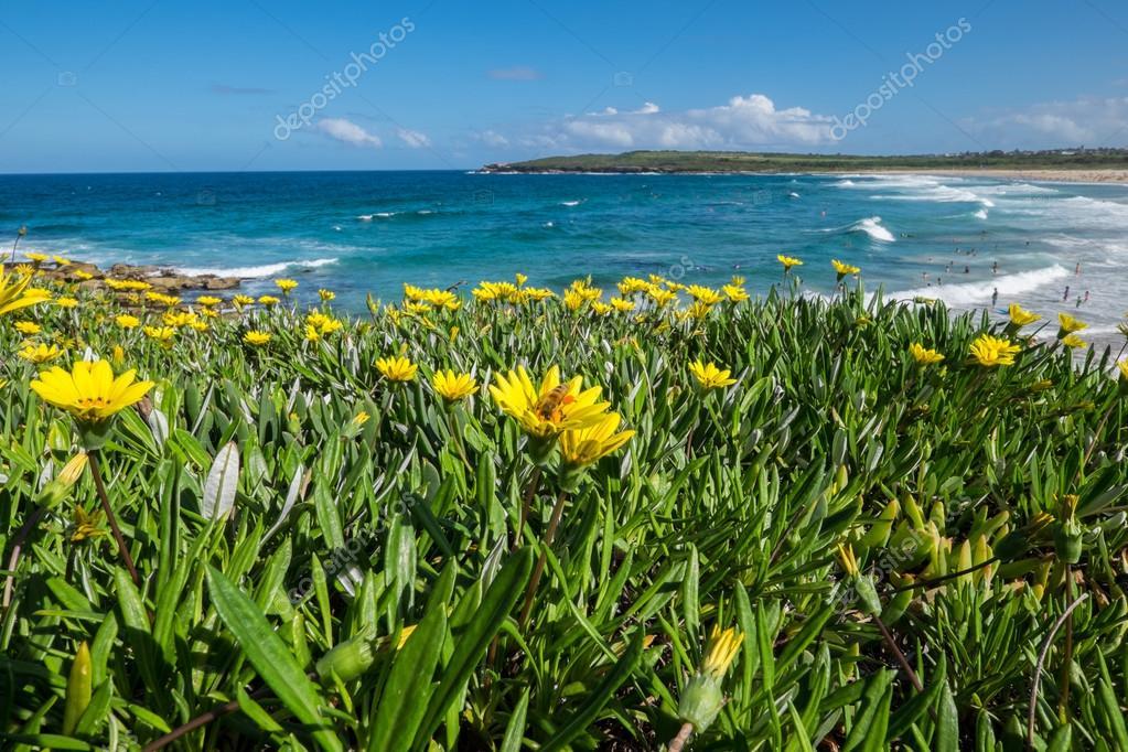 Wild flowers field next to the ocean