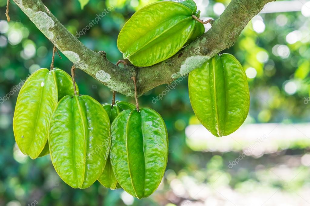Star fruits on the tree