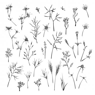 Set of grass silhouettes isolated on white background.