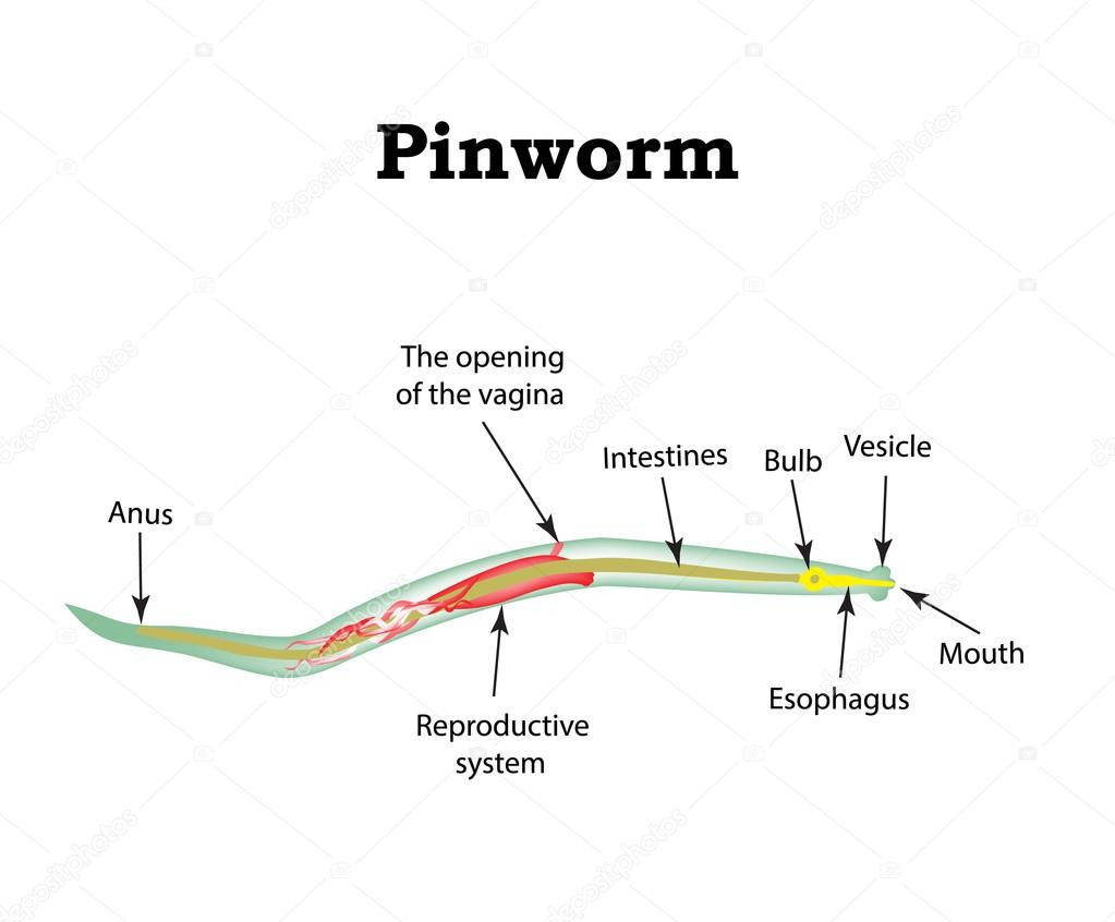 szárnyas paraziták emberek emberi parazita profilaxis gyógyszerek