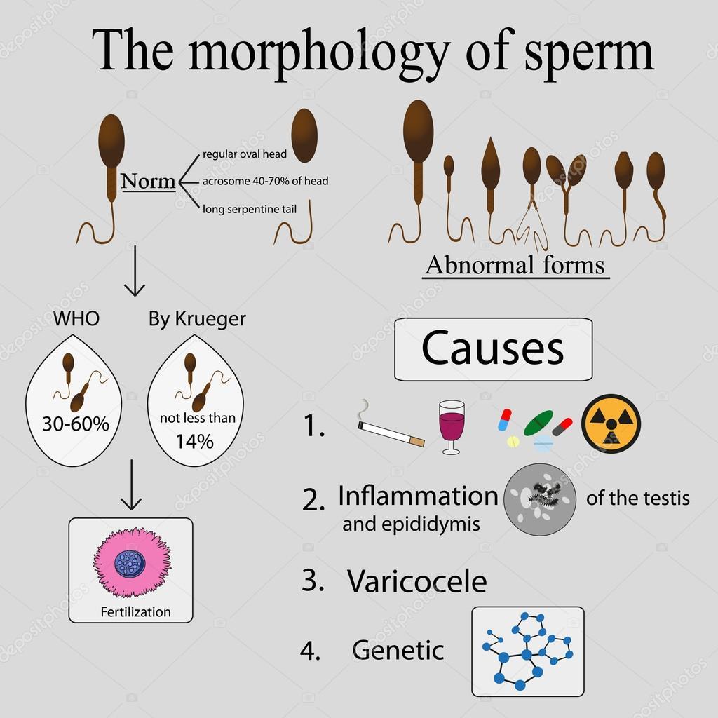 Бактерии сперматоз