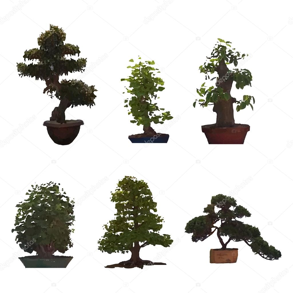 Set of six different bonsai on an isolated background.