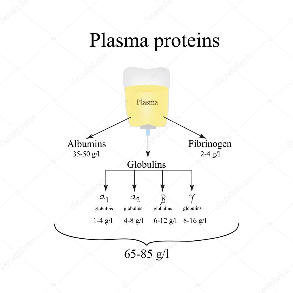 Kan Proteinleri Nedir