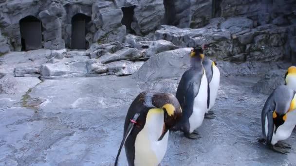 csoport a pingvinek