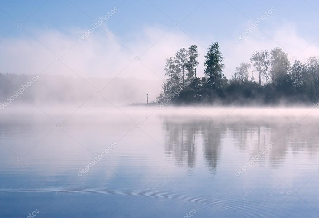 Lake forest fog
