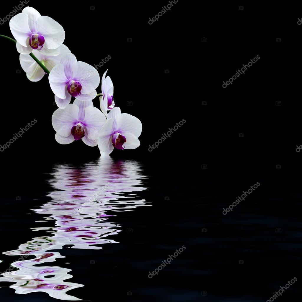 White orchid water reflection