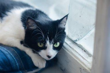 sad black white cat lying on bed at window