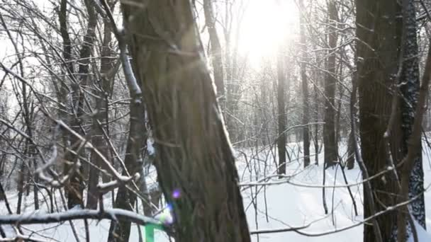 Winter forest in snow and sun, shooting video in slow motion