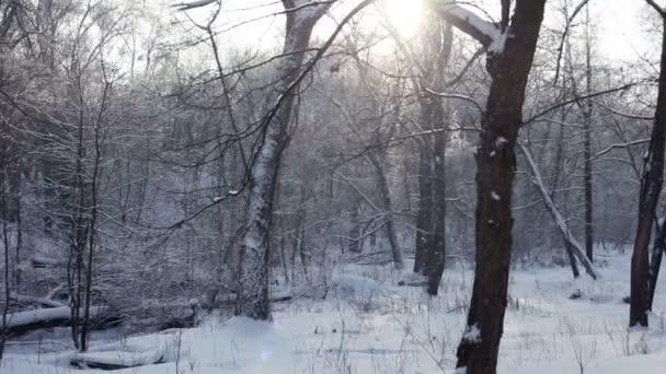 Schnee fällt. Winterwunderland.