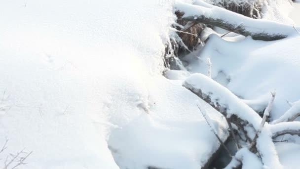 sněhu zimní stromy. sněží Sněžná